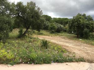 Terreno Urbanizable en Venta en Alhaurín de la Torre - Pinos de Alhaurín - Periferia / Pinos de Alhaurín - Periferia