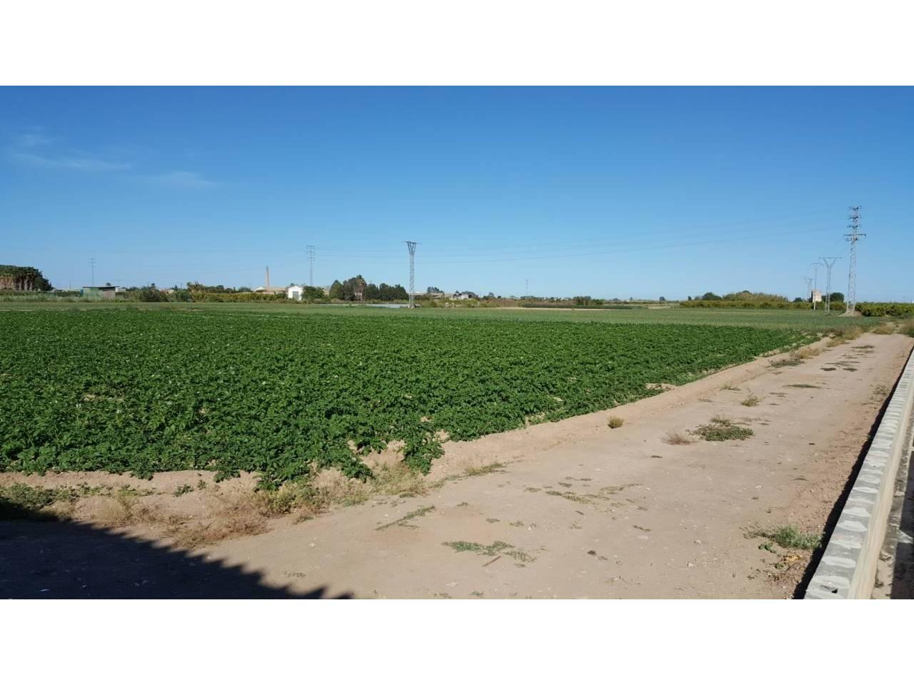 Stadtgrundstück  Puerto de Catarroja. 2778 m² solar, 3 hanegadas de terreno rustico.