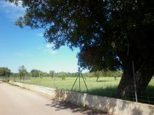 Venta Terreno  zona centre - llubí