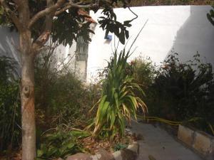 Alquiler Vivienda Casa-Chalet gran canaria - teror