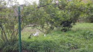 Terreno en Venta en Valleseco, Zona de - Valleseco / Valleseco