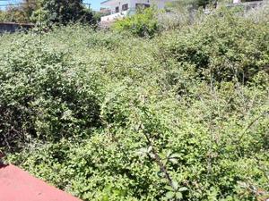Terreno en Venta en Arucas, Zona de - Arucas / Arucas