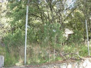 Venta Terreno Terreno Residencial del bosque, 148