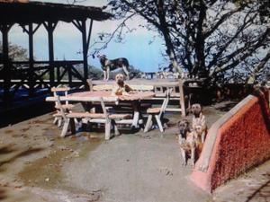 Finca rústica en Venta en Sauzal - Tacoronte, Zona de - Tacoronte / Tacoronte