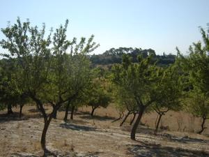 Venta Terreno Terreno Urbanizable moscari - selva