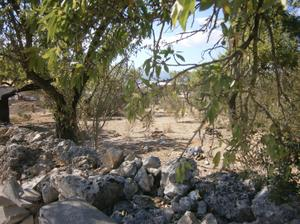 Venta Terreno  muro - santa margalida, zona de - muro
