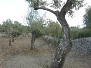 Terreno en Venta en Zona Centre - Costitx / Costitx