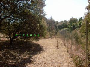 Venta Terreno Terreno Residencial villaviciosa de odón, zona de - villaviciosa de odón