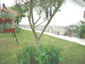 Alquiler Vivienda Casa-Chalet roces, lado montevil