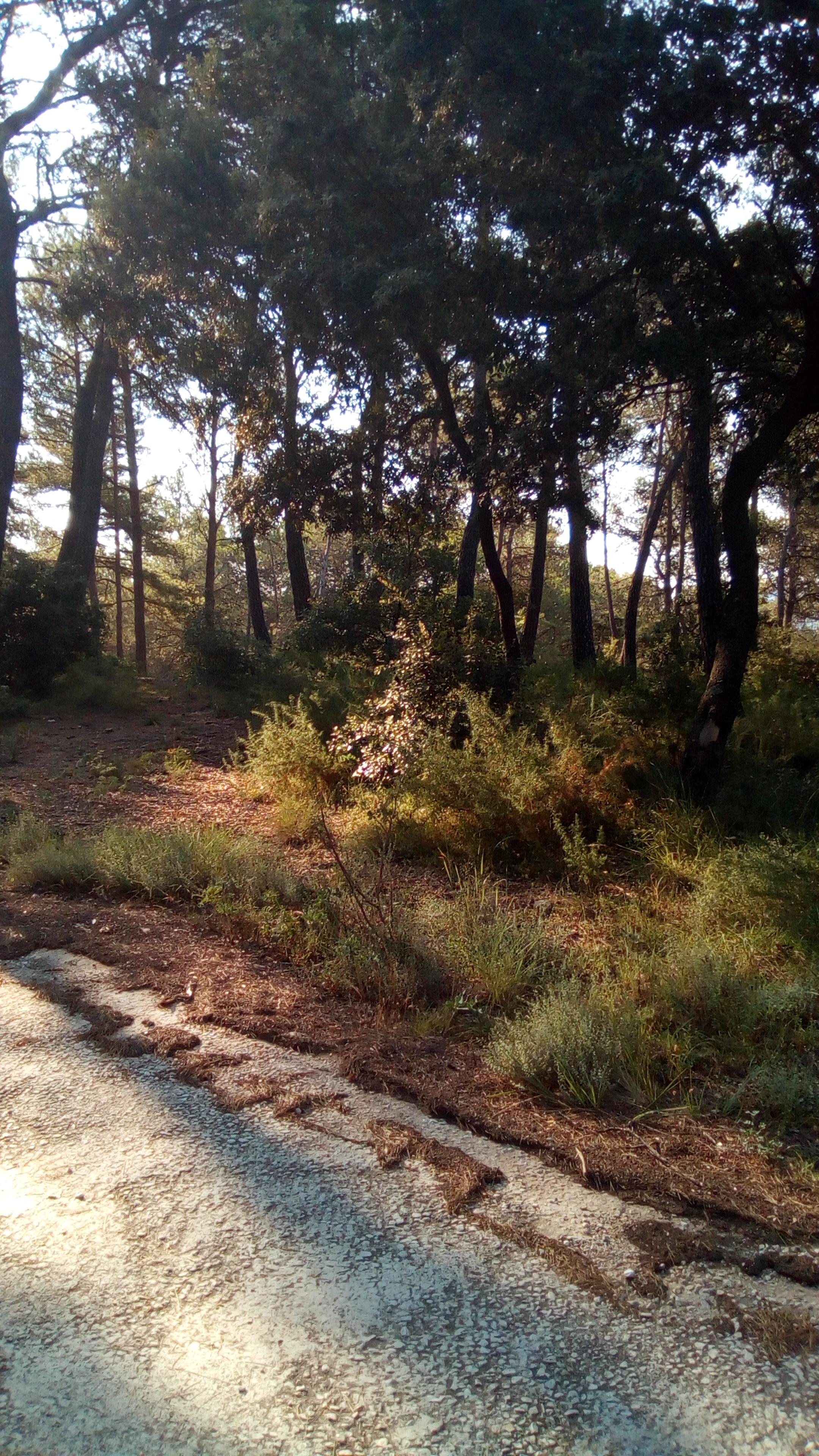 Solar urbano  Avenida bosc. Parcela en urbanización ranxos de bonany, plena naturaleza.