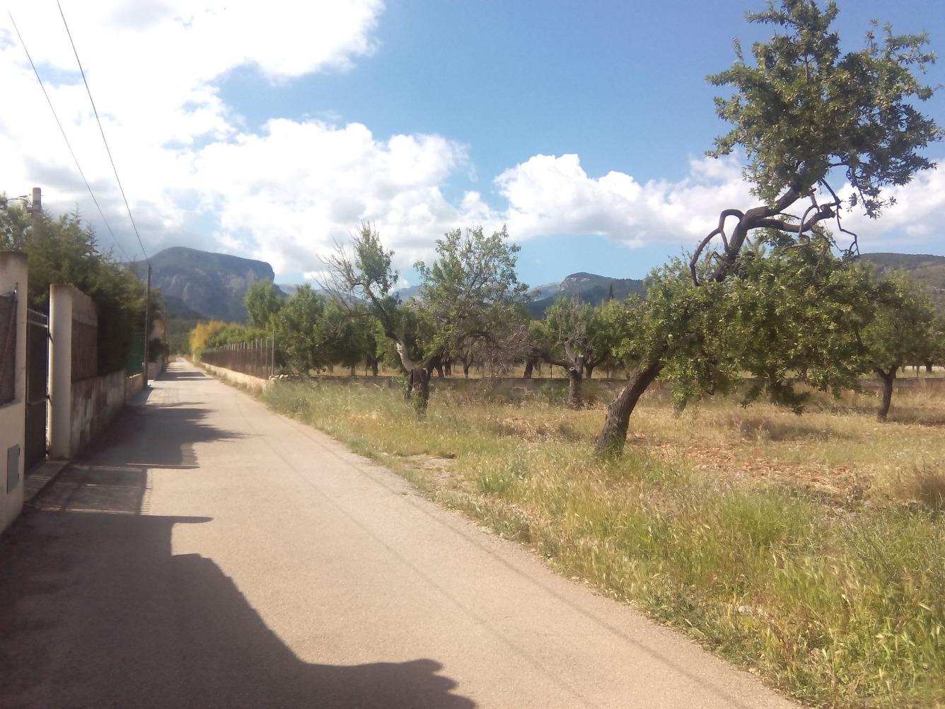 Solar urbano  Santa maria del camí - binissalem, zona de - binissalem. Binissalem: ocasión!! parcela de 4.500m2 aproximadamente de fáci