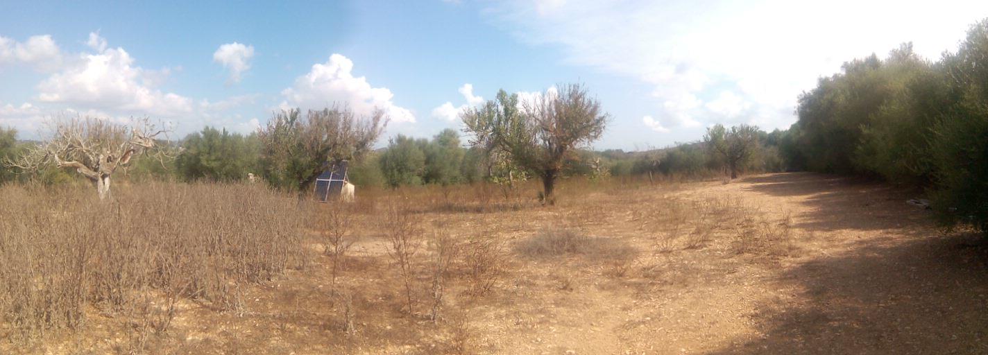 Solar urbà  Carrer del bous. No dispone de cédula habitable por que es terreno agrícola. plac
