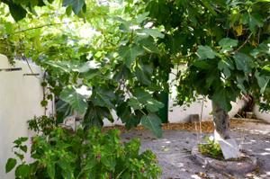 Piso en Venta en Calle Doctor Asuero / San Roque - La Concordia