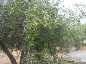 Terreno en Venta en Motril - Algaidas / Motril