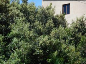 Terreno Urbanizable en Venta en Sant Vicenç Dels Horts ,sant Vicenç Dels Horts / Sant Vicenç Dels Horts