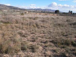 Venta Terreno Terreno Urbanizable sax