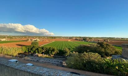 Viviendas y casas de alquiler en Llevant, Palma de Mallorca