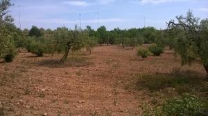 Venta Terreno  santa oliva, zona de - santa oliva
