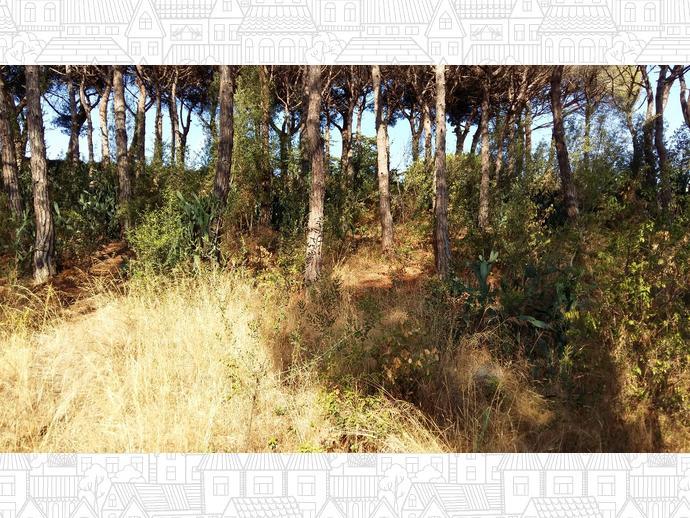 Foto 30 de Finca rústica en Urb. Golf - Centro Del Pueblo / Sant Vicenç de Montalt