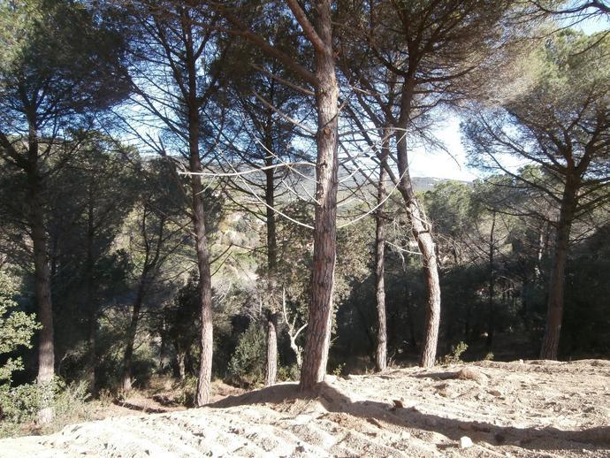 Foto 8 de Terreno Urbanizable en Urb.El Mirador De Llavaneres / Sant Andreu de Llavaneres