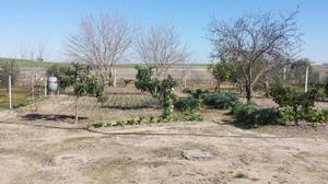 Terreno en Venta en Los Tollos / Lebrija