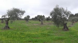 Terreno en Venta en Resto Provincia de Badajoz - Montijo / Montijo