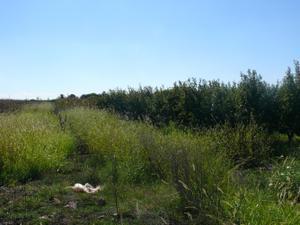 Terreno en Venta en Resto Provincia de Badajoz - Torremayor / Torremayor