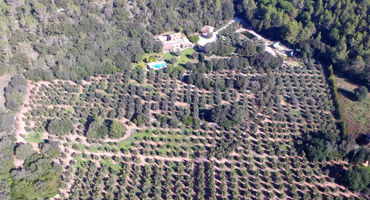 Location saisonnière Maison  Tramuntana, zona de - esporles. Sa tafona de son quint con pista padel esporles
