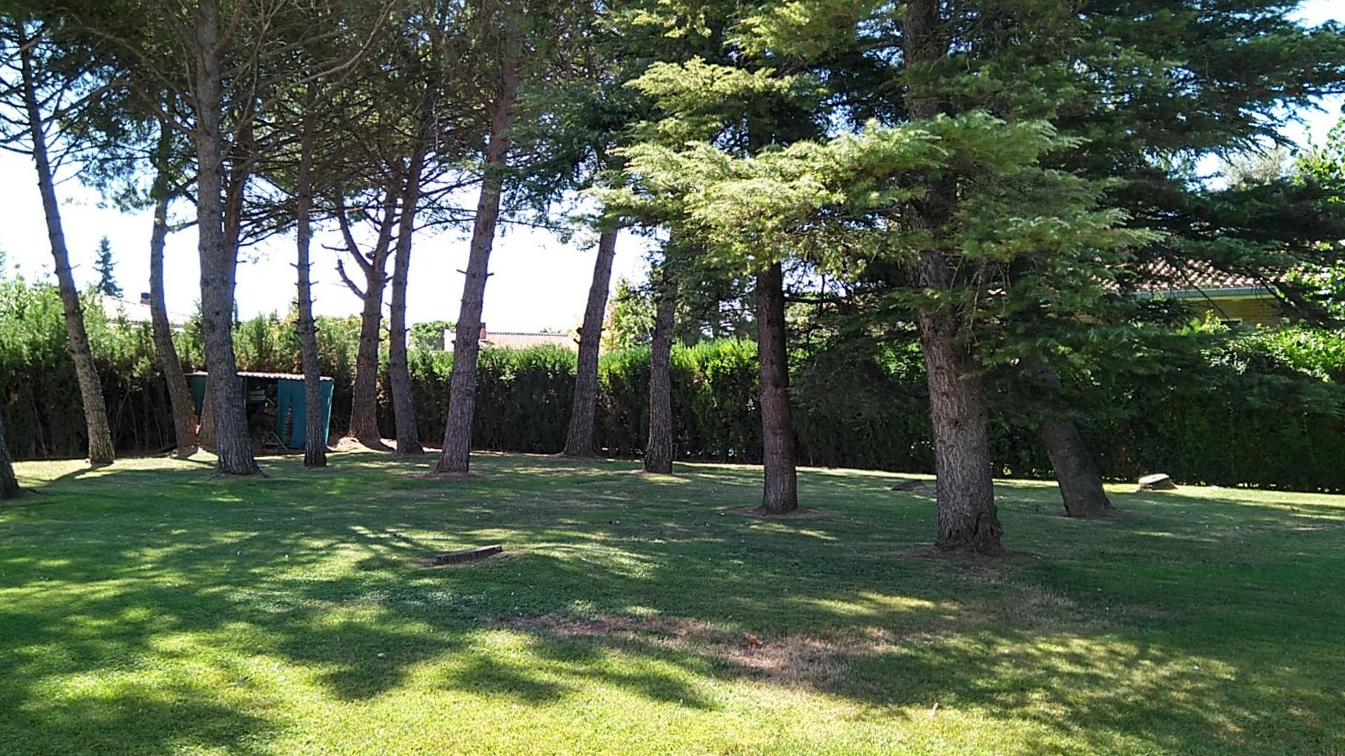 Solar urbano  Calle sant francesc , 34. Parcela con pinos de 30 años y césped. forma rectangular. sumini