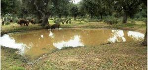 Terreno en Venta en Campo Charro / Tamames