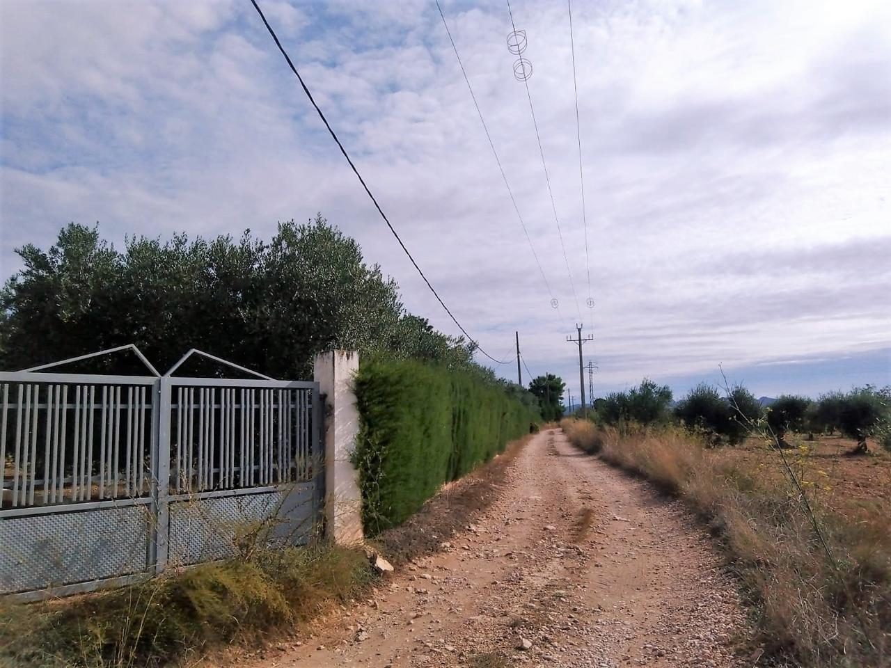 Area edificabile urbana  Calle partida baiona. Terreno de 13.985m2 aprox. con 500 olivos aproximadamente en ple