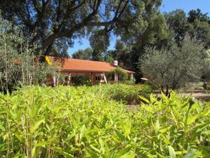 Finca rústica en Venta en Zona Privilegiada en el Valle del Tietar / Candeleda