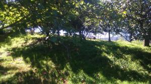 Terreno Urbanizable en Venta en Usurbil, Zona de - Usurbil - Agiñaga / Usurbil
