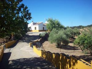 Finca rústica en Venta en Zona de - Peñaflor / Peñaflor