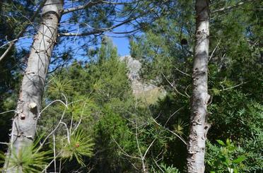 Bebaubares Gelände zum verkauf in Passeig D'artà, Artà