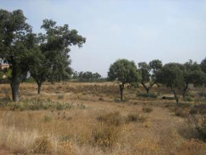 Terreno Urbanizable en Venta en Tres Arroyos / Valdelacalzada