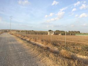 Terreno en Venta en Bajo Guadalquivir - Lebrija / Lebrija